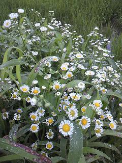 畔に咲く花