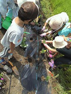 子供たちの花植え