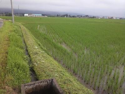 草刈り最終日