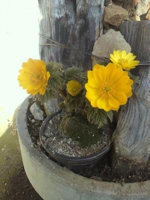 元気の出る花
