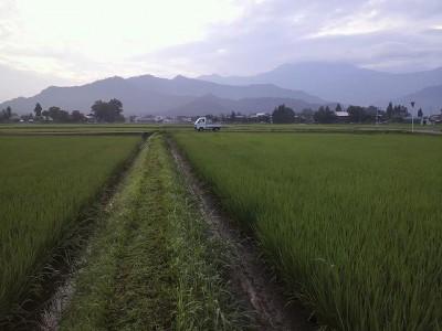 今朝の草刈り
