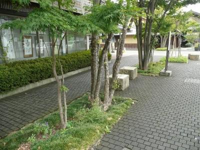 栗の木を敷きつめた道