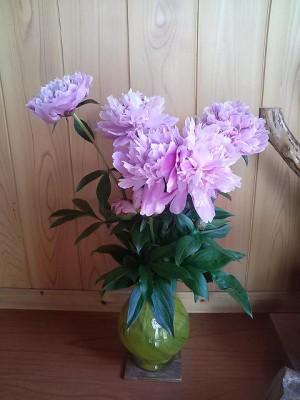 頂きもののお花